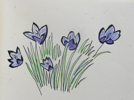 Crocus Haiku