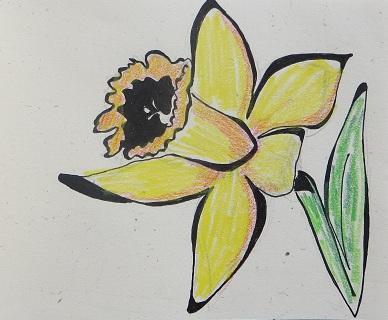 Daffodil Haiku