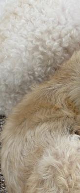 puppy fur