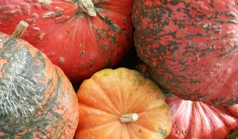 Spina Farms Pumpkin Patch in San Jose, CA Spina Farms