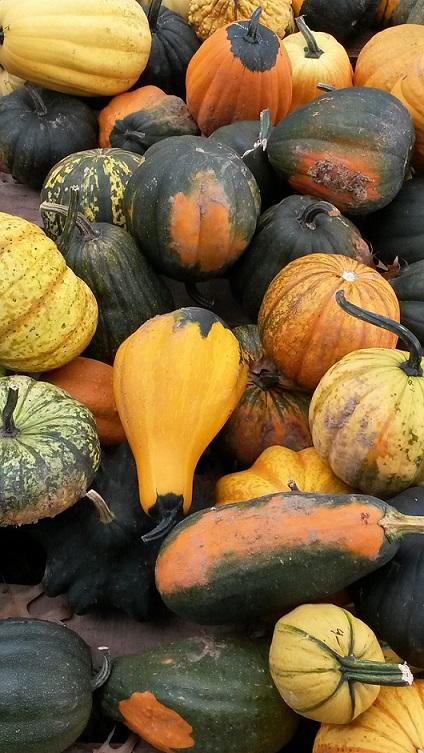 Spina farms pumpkin patch address change